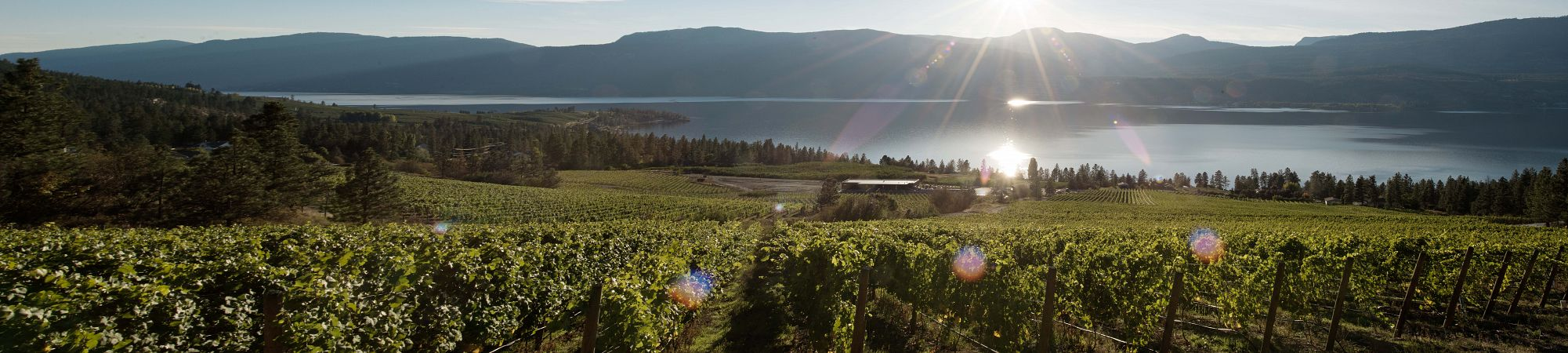 D'Vine Wine Getaway Packages